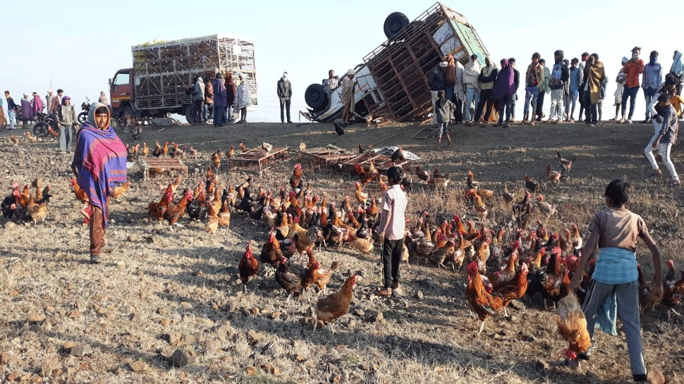 barwani,Pickup vehicle, full of chickens ,overturned,people gathered